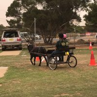 Southern Horse Carriage Driving