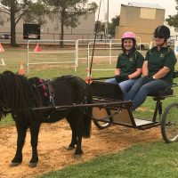 Southern Horse and Carriage Driving Challenge